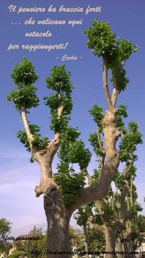 strano albero a ciuffi