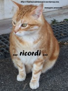 GattoRosso2